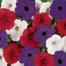 20 Wave Petunia seeds red white and blue