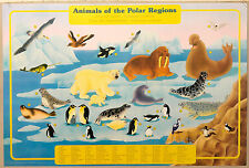 (PRL) 1990 ANIMALS POLAR REGIONS ANIMALI POLARI VINTAGE PRINT AFFICHE ART POSTER