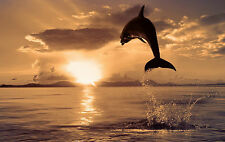 Framed Print - Dolphin Jumping in the Ocean at Sunset (Picture Poster Shark Art)