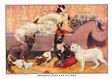 """Wright's Lithograph -1912- """"DOMESTIC CATS & KITTENS"""""""