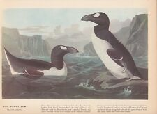 "1942 Vintage AUDUBON BIRDS #341 ""GREAT AUK"" LOVELY Color Art Plate Lithograph"