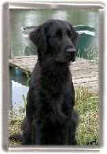 Flatcoated Retriever Fridge Magnet No 1 by Starprint