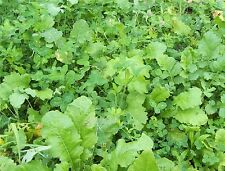 4 lbs DEER FOOD PLOT MIX Seeds, NO TILL Clovers, Chicory, Rape, Turnip Brassica