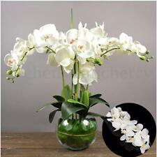 12 Head Artificial Butterfly Orchid Flower Bouquet Phalaenopsis Wedding Decor
