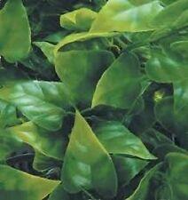 1/35 Scale Jungle Plant #10