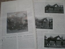 Photo article Horse training the Theakston Hall yearlings 1904