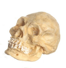 Skull, Doll House Miniature, 1.12th Scale Cranium, Doctors, Halloween