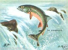 CARD BON POINT Salmo salar Atlantic salmon Saumon atlantique POISSON FISH 60s