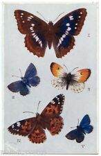PAPILLONS ANGLAIS. BRITISH BUTTERFLIES AND MOTHS. INSECT. INSECTES. RAPHAEL TUCK