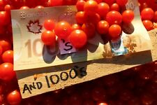 HUNDREDS AND THOUSANDS Tomato Seeds - 50 Seeds