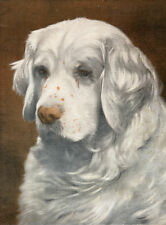 CLUMBER SPANIEL SANDRINGHAM SPARK THE KINGS DOG OLD ORIGINAL 1934 ART PRINT PAGE