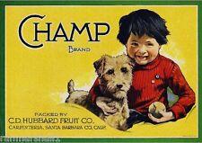Carpinteria Champ Airedale Terrier Puppy Dog Lemon Citrus Crate Label Art Print