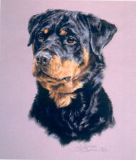 Rottweiler Rottie Head Study Limited Edition Art Print by UK Artist Sue Driver