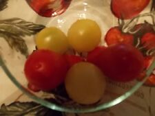 Dr. Carolyn Heirloom Tomato Seeds Free Shippping plus 20 Red Cherry Seeds