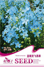 1 Pack 30 Consolida Seeds Blue Consolida Ajacis Smurfs Delphinium Flowers A172