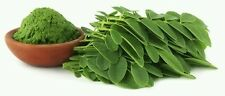 Moringa or malunggay powder
