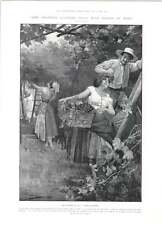 1905 The Vintage In Italy Great Gathering Mr Swinburne's Novel