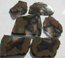 ( 6 )RARE.PRIDAY Thunderegg  slices /Oregon128 grams