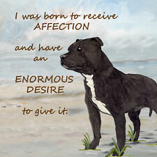 STAFFORDSHIRE BULL TERRIER DOG new glossy hardboard plaque tile Sandra Coen