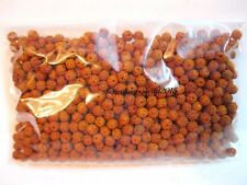 Rudraksha Rudraksh 5 Mukhi Loose 5mm Beads Yoga Meditation Wholesale Lot of 251