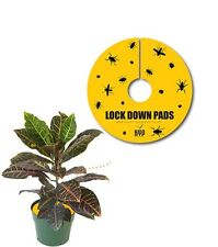 """High Yields Lock Down Pads, 3"""", Pack OF 15 Sticky Traps SAVE $$ W/ BAY HYDRO $"""