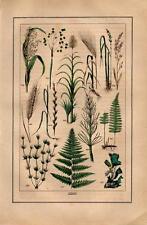 1873 STRAESSLE HC LITHO iceland moss, stonewort, sugarcane, millet, rice, barley