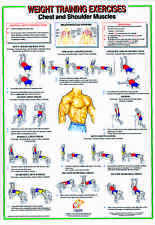 Weight Training & Bodybuilding A2 Laminated Chart - Chest & Shoulder Muscles