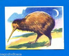 ANIMALI - Lampo 1964 - Figurina-Sticker n. 244 - KIWI -New
