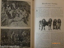 Bloodhound Tracking Dog Tracker Hunting Hunt Club Rare Old Antique Article 1907