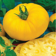 Sunny Boy Tomato! LOW ACID! 20 Seeds! OVER 200 HEIRLOOM TOMATOES IN OUR STORE!