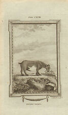 "1785 Cuivre Gravure-Buffons Natural History. ""CHEVRE NAINE"""