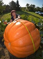 Pumpkin Dill's Atlantic Giant Guiness World Record Size COMBINED SHIPPING