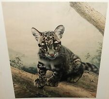 """CHARLES FRACE """"CLOUDED LEOPARD CUB"""" LIMITED HAND SIGNED IN PENCIL LITHOGRAPH"""
