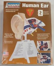 Lindberg 7 1/4 Inch Human Ear Anatomy Model Kit