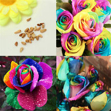 New 200pcs Rose Flower Seeds Valentine Lover Garden Plants Colorful Rainbow Gift