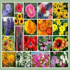 1/4 oz Burst Of Bloom Annual & Perennial Wildflower Seed Mix 20 Species of Wildf