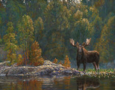 MOOSE ART PRINT - North Country Moose by Bruce Miller 14x11 Wildlife Poster