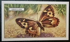 GRAYLING  Butterfly   Original  Vintage Colour Card  VGC