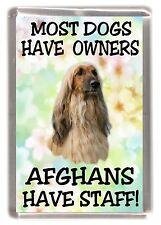 """Afghan Hound Dog Fridge Magnet """"Most dogs ......Afghans Have Staff!"""" - Starprint"""