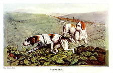 ENGLISH POINTERS ON POINT, BLOOD SPORT HUNTING HARES RABBITS ALKEN PRINT 1903
