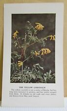 circa 50's / 60's Collectors Card - Cassell's Nature Cards Series A # 150