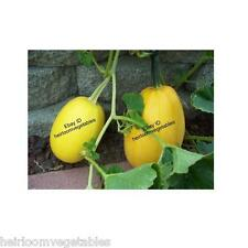 30 Spaghetti squash seeds. HEIRLOOM.***SAME DAY SHIPPING***