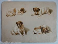 Planche signée Helena Maguire - Foxterrier pups - Edition Raphael Tuck - 19ème