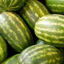 400 Seeds Kleckley Sweet  Watermelon   new seeds for 2017 Non-GMO Heirloom