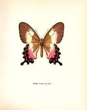 """1963 Vintage PROCHAZKA BUTTERFLY """"PARIDES CRAMER"""" COLOR offset Lithograph"""