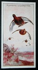 RED GROUSE     Vintage Colour Card   VGC