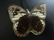 noble butterfly-queen real insect design pendants& Necklace CS3004