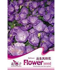 FD1658 Campanula Seed Purple Bellflower Garden Flower Seeds ~1 Pack 30 Seeds~