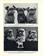 BRUSSELS GRIFFON NAMED CHAMPION DOGS OLD ORIGINAL DOG PRINT PAGE FROM 1934