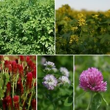 Green Manure - Summer Mixed - 25sq.m. pack